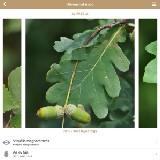 Fa Book interaktív fahatározó ( iPhone alkalmazások )