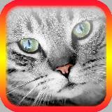 A Macska Fordító Szimulátor ( Android alkalmazások ) ingyenes letöltése