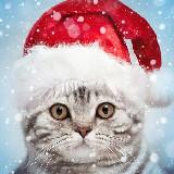 Christmas Photo Frames – karácsonyi fotó ( Android alkalmazás )
