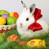 Húsvét Élő Háttérkép ( Android mobilra )