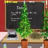Weed Firm: RePlanted ( Apple mobile )